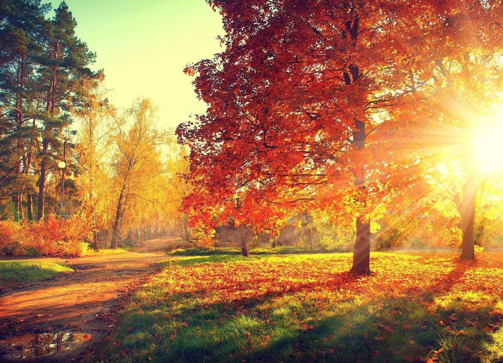 fotobehang bos herfst