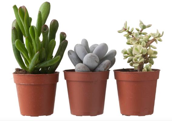 planten hema