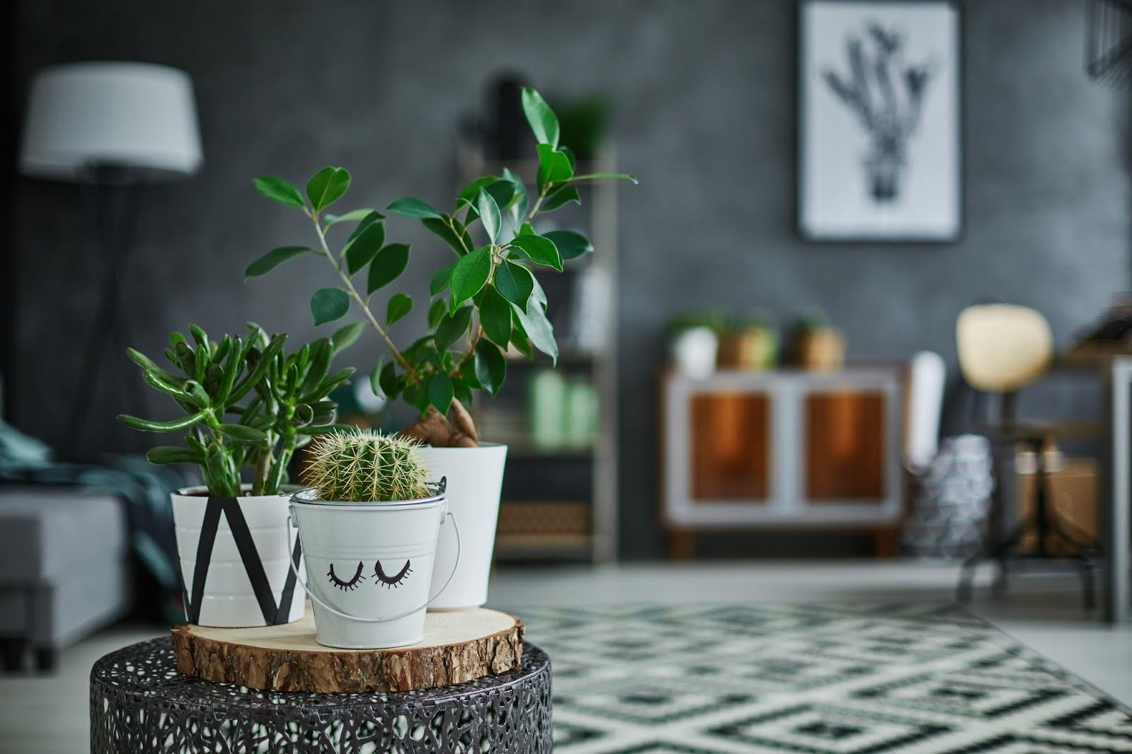 kamerplanten weinig verzorging