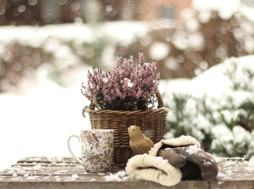 tuin winter